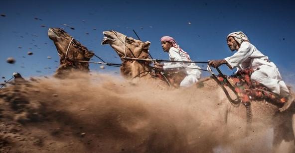 """Bức ảnh """"Cuộc đua lạc đà truyền thống ở Ả Rập"""" của tác giả Ahmed Al Toqi là tác phẩm giành giải ba trong cuộc thi năm nay. Đây là một trong những cuộc đua truyền thống của người Ả Rập. Mục đích của cuộc thi là thể hiện được vẻ đẹp và sức mạnh của loài lạc đà Ả Rập cũng như kỹ năng của người điều khiển chúng."""