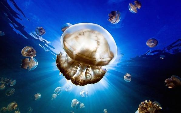 Ngập sâu dưới lòng nước biển. (Tác giả: Nadia Aly).