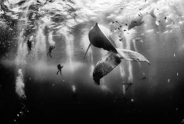 """Tác phẩm giành chiến thắng trong cuộc thi năm nay đó là bức ảnh """"Những chú cá voi lưng gù"""" của tác giả Anuar Patjane. Bức ảnh ghi lại khoảnh khắc của một người thợ lặn đang bơi gần một chú cá voi lưng gù tại bờ biển phía Tây Mexico. (Tác giả: Anuar Patjane)"""
