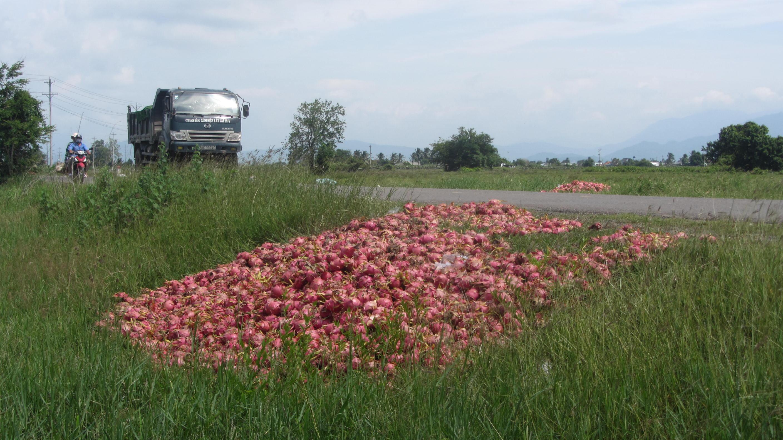 Tình trạng thanh long đổ đống ven đường hoặc bán với giá rẻ mạt không phải là hiếm đối với nhiều nông sản Việt