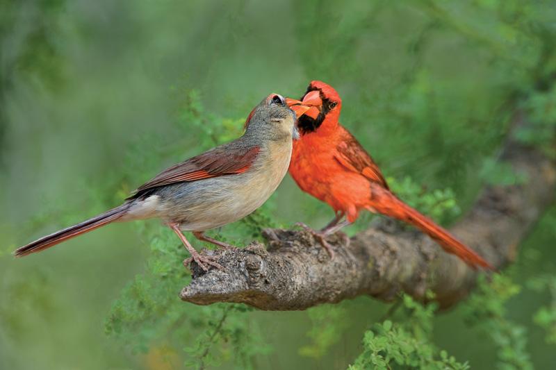 Nhiều loài chim hoang dã sẵn sàng chấp nhận nguy cơ chết đói để được ở bên bạn tình. Ảnh: Mydevstaging