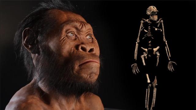 10 phát hiện khoa học, tổ tiên mới của loài người, Homo naledi, công nghệ chỉnh sửa gen, loài sinh vật mới, kháng sinh mới, thiên hà sáng nhất
