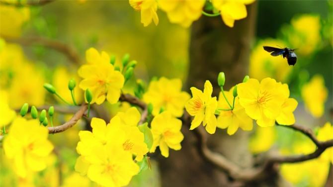 Những loài hoa ngày Tết nên chưng trong nhà để đón tài lộc - Ảnh 1