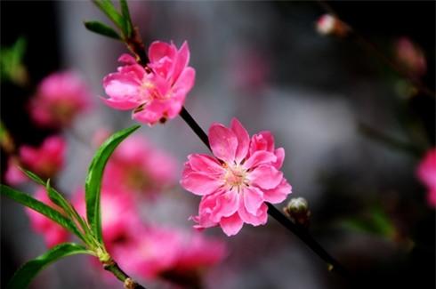 Những loài hoa ngày Tết nên chưng trong nhà để đón tài lộc - Ảnh 2