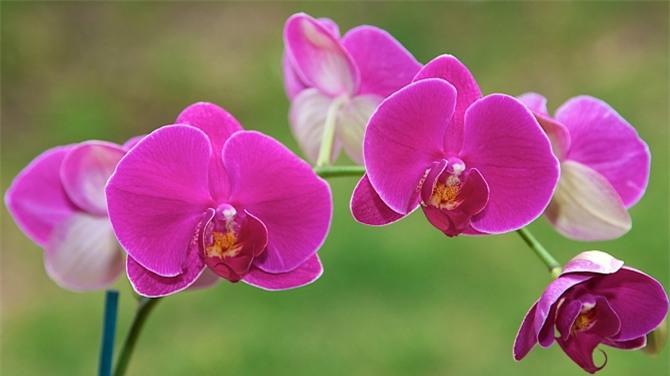 Những loài hoa ngày Tết nên chưng trong nhà để đón tài lộc - Ảnh 3