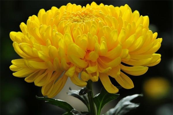 Những loài hoa ngày Tết nên chưng trong nhà để đón tài lộc - Ảnh 4