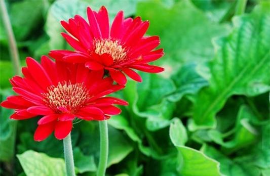 Những loài hoa ngày Tết nên chưng trong nhà để đón tài lộc - Ảnh 5
