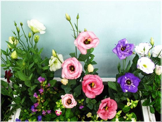 Những loài hoa ngày Tết nên chưng trong nhà để đón tài lộc - Ảnh 8