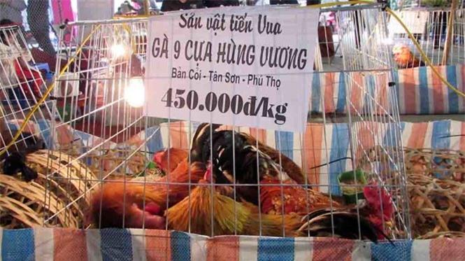 Giống gà chín cựa có giá 450.