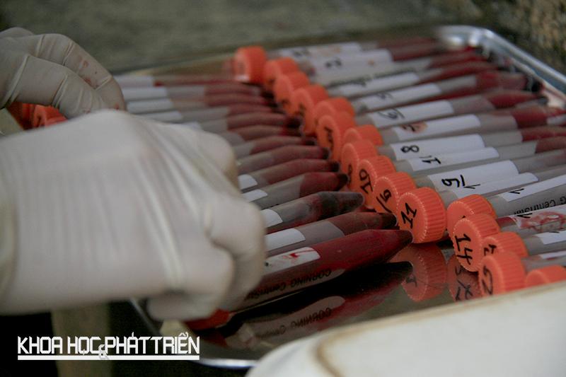 Khỉ trên đảo được nuôi cách ly vì mục đích nghiên cứu y học. Những mẫu máu được các chuyên viên POLYVAC đánh số thứ tự, theo dõi phục vụ nghiên cứu.