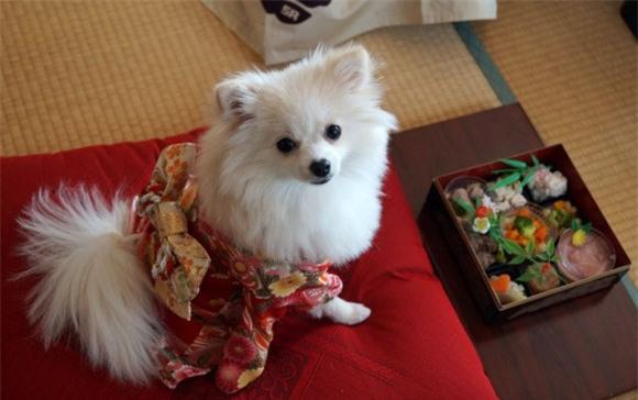 Nam moi ron rang voi nhung chu cho Nhat mac kimono-Hinh-2