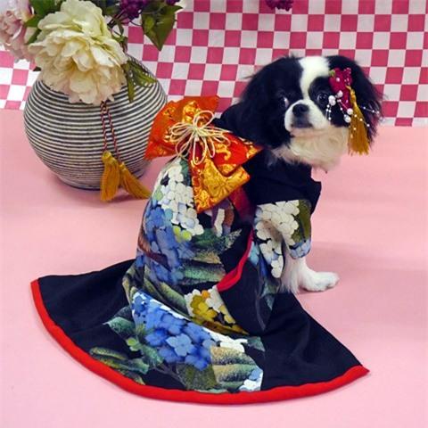Nam moi ron rang voi nhung chu cho Nhat mac kimono-Hinh-3