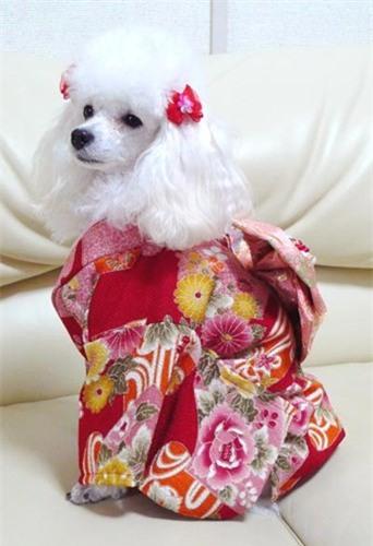 Nam moi ron rang voi nhung chu cho Nhat mac kimono-Hinh-4