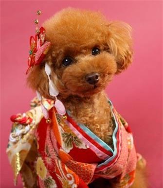 Nam moi ron rang voi nhung chu cho Nhat mac kimono-Hinh-5