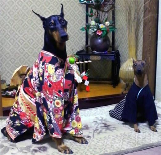 Nam moi ron rang voi nhung chu cho Nhat mac kimono-Hinh-7