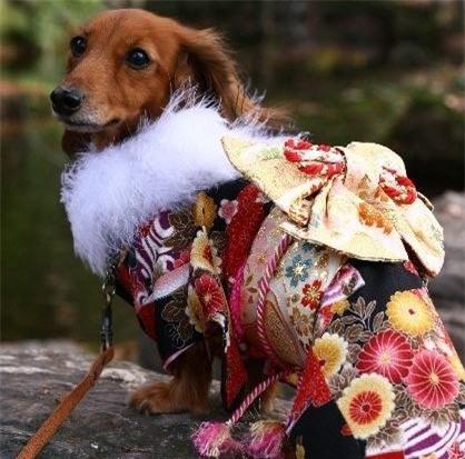 Nam moi ron rang voi nhung chu cho Nhat mac kimono-Hinh-9