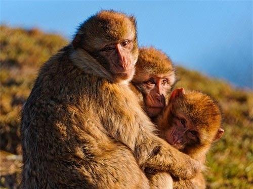 động vật, cá thể cái, cá thể đực, tác oai tác quái, bắt nạt, bạch tuộc, khỉ