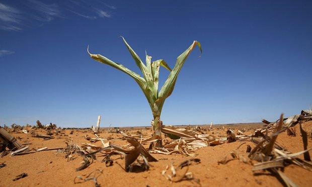El Nino gây ra hạn hán, lũ lụt khiến thế giới thiếu lương thực do mùa màng thất bát - Ảnh: Reuters