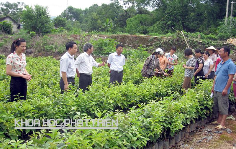 Cán bộ dự án kiểm tra chất lượng giống cây để chuyển giao cho bà con nông dân tại Bắc Kạn. Ảnh: HN