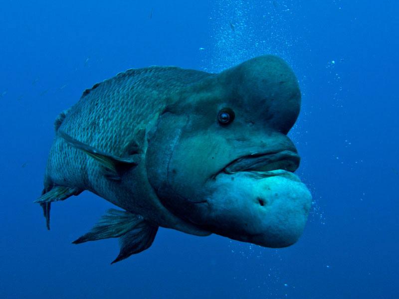 рыба с дурацким названием фото