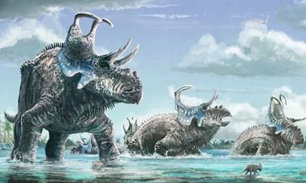 Hình vẽ mô phỏng loài khủng long mới Machairoceratops cronusi.
