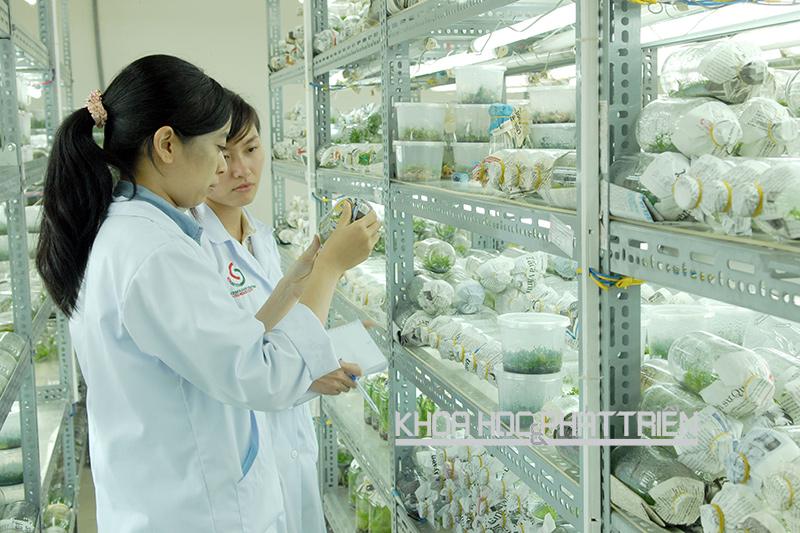 Các cán bộ Trung tâm Công nghệ sinh học TPHCM kiểm tra sự phát triển của cây nuôi cấy mô. Ảnh: Mạnh Linh