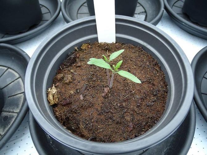 Cây trồng trong điều kiện mô phỏng sao hỏa cho kết quả an toàn