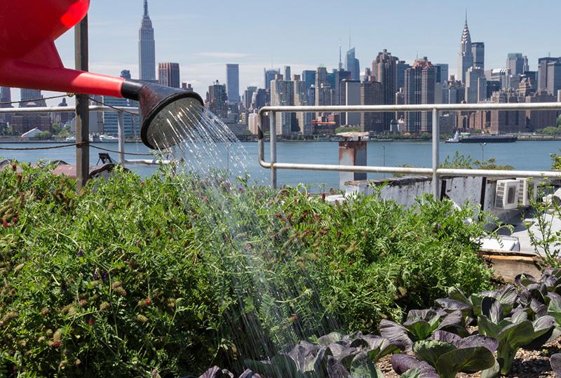 Một mảnh vườn đô thị tại Mỹ. Ảnh: Huffpost