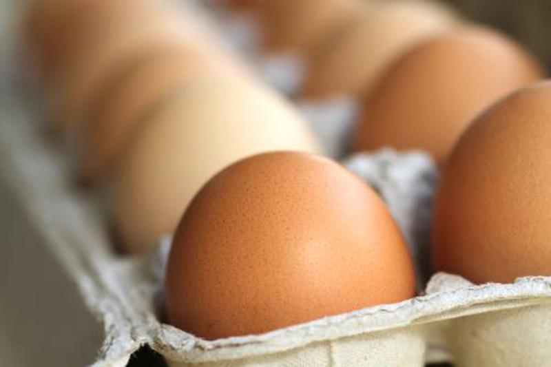 Canada phát triển kỹ thuật phát hiện giới tính trứng gà.
