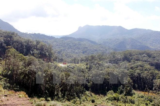 Những cánh rừng nguyên sinh ngàn năm trong Khu dự trữ sinh quyển thế giới Langbiang. (Ảnh: Phạm Kha/TTXVN)