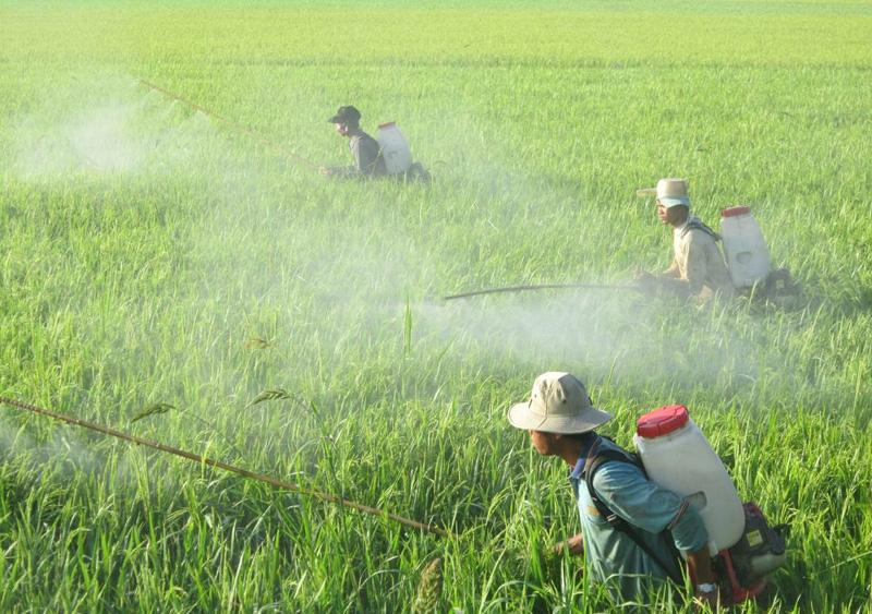 Thuốc trừ sâu là nguyên nhân gây ra tình trạng ô nhiễm môi trường nghiêm trọng