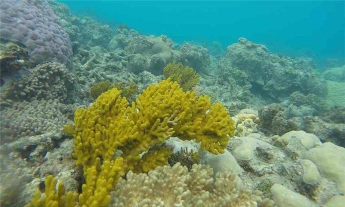 Rạn san hô Great Barrier được công nhận là Di sản thiên nhiên thế giới vào năm 1981.