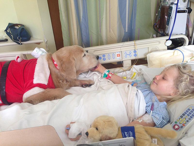 Chương trình điều trị bằng thú nuôi đang được các bệnh viện ở Úc áp dụng rộng rãi.