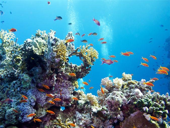 Great Barrier được coi là rạn san hô lớn nhất thế giới với 3.000 tảng đá ngầm và 900 hòn đảo.