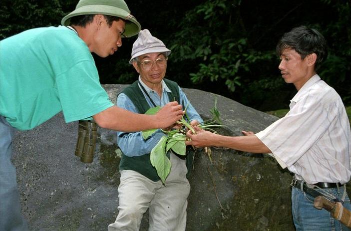 Giáo sư Võ Quý và cộng sự đang nghiên cứu các loài thực vật trong Vườn quốc gia Vũ Quang, Hà Tĩnh.
