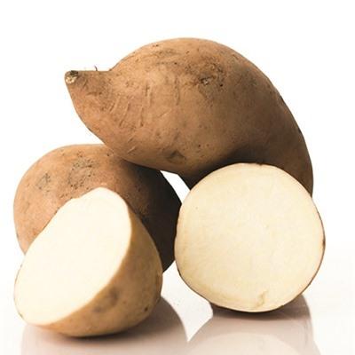 Hoạt chất có trong khoai lang trắng có thể trị bệnh đái tháo đường