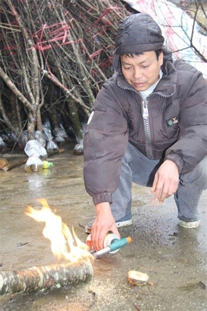 Một người bán hàng đang đốt gốc đào