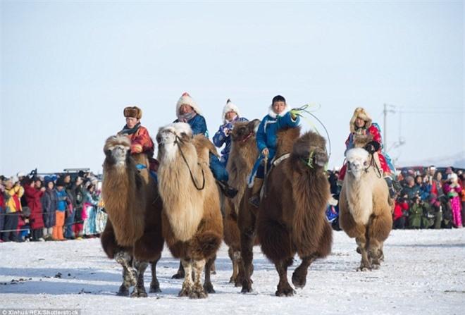 Cuộc đua lạc đà kỳ thú của người Mông Cổ