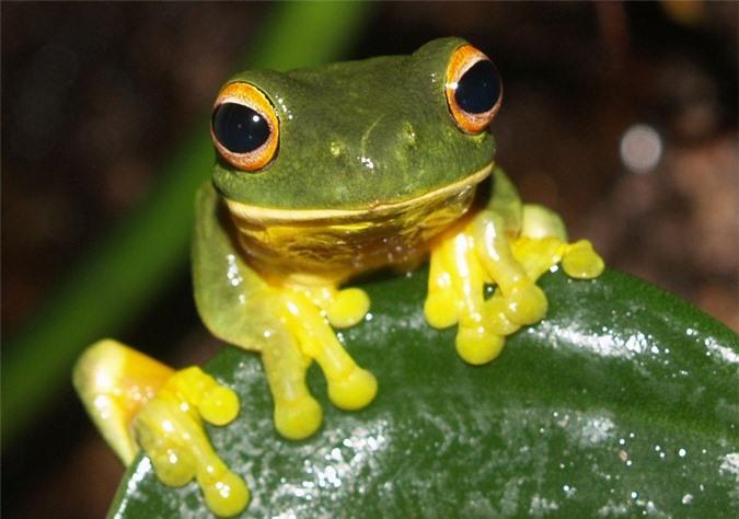 Nước bọt ếch là một chất lỏng có độ nhớt phụ thuộc vào sự thay đối tốc độ.