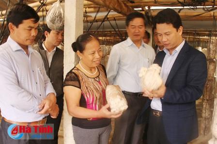 Chủ tịch UBND tỉnh Hà Tĩnh Đặng Quốc Khánh kiểm tra tình hình sản xuất nấm. Ảnh: Báo Hà Tĩnh điện tử
