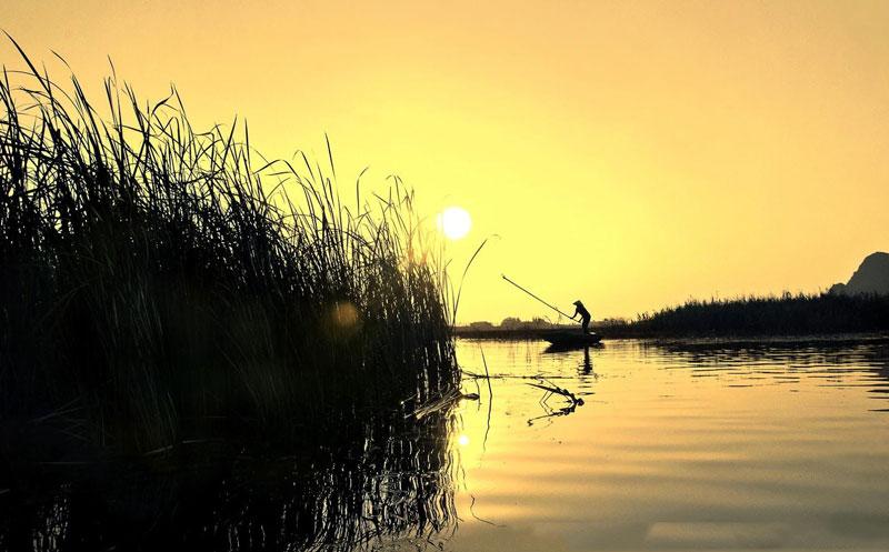 Từ năm 1960, một tuyến đê dài hơn 30 km được đắp bên phía tả ngạn để trị thủy sông Đáy, biến Vân Long thành một vùng đất ngập nước rộng đến 3.500ha, kéo những loài chim di trú dừng chân kiếm ăn trên đường tránh rét. Ảnh: Bao Vu.