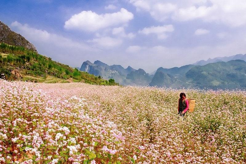 Tỉnh Hà Giang đang thực hiện việc cắm biển di tích và nâng cao năng lực nhận thức của cộng đồng các dân tộc, tạo điều kiện phát triển kinh tế, góp phần nâng cao đời sống của các dân tộc vùng cao. Ảnh: Hachi8.