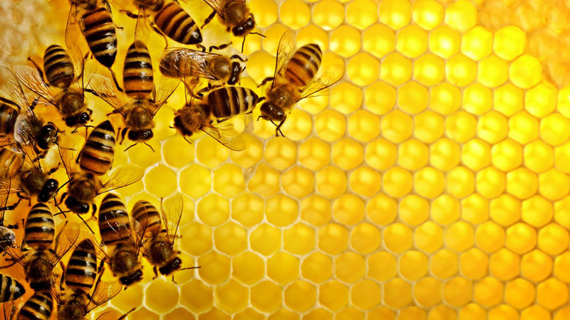 Mật ong là một loại thực phẩm giải rượu hiệu quả.