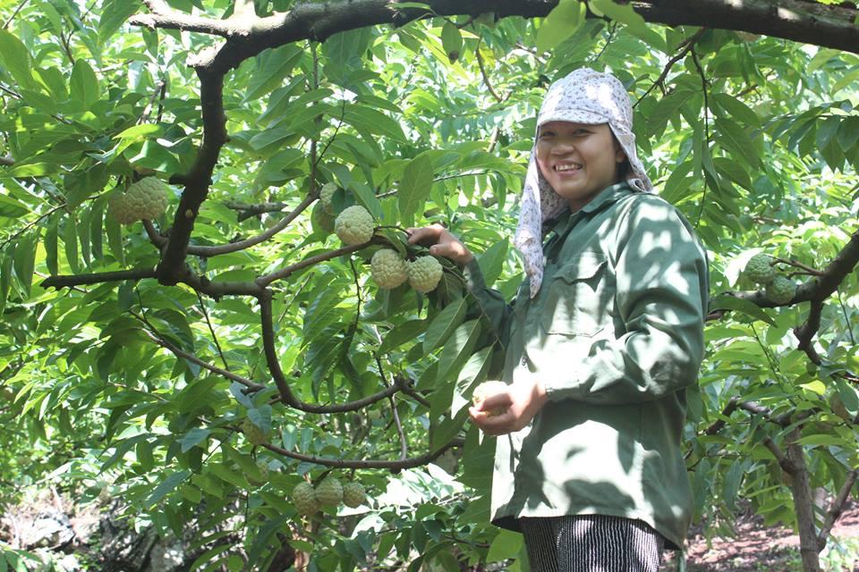 Na La Hiên được coi là cây thoát nghèo của dân xã La Hiên.