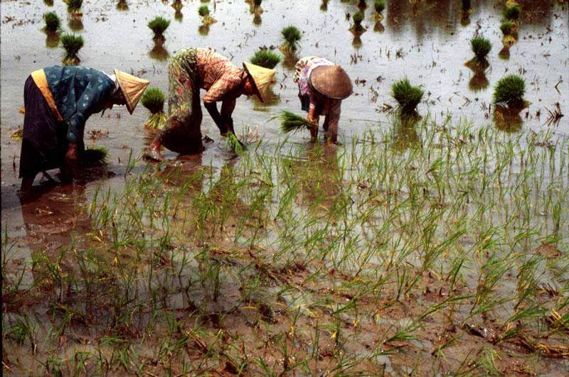 4. Bangladesh - sản lượng: 34.500 triệu tấn/năm.