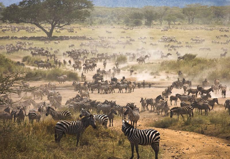 2. Tanzania. Là đất nước ở bờ biển phía Đông châu Phi. Người dân Tanzania được đánh giá là rất lịch thiệp, thân thiện và sẵn sàng giúp đỡ người khác. Hơn thế nữa, Tanzania còn sở hữu nhiều hòn đảo xinh đẹp, khu bảo tồn động vật hoang dã ấn tượng, đỉnh núi cao nhất châu lục… Nơi đây trở thành điểm đến đầy hấp dẫn ở châu Phi.