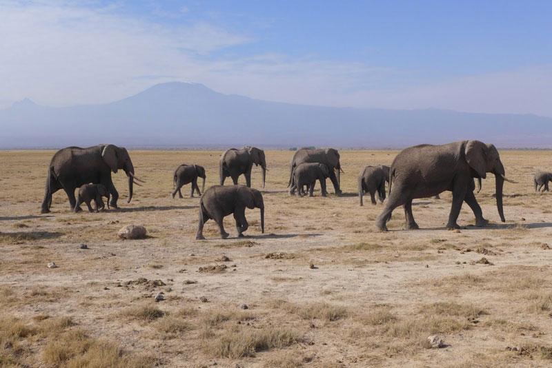 """6. Kenya. Là đất nước tọa lạc tại miền Đông châu Phi. Không chỉ được mệnh danh là """"thiên đường của thế giới động vật hoang dã"""", Kenya còn hấp dẫn du khách bởi những resort đẳng cấp, đồ ăn kiểu Âu và các dịch vụ du lịch chuyên nghiệp."""
