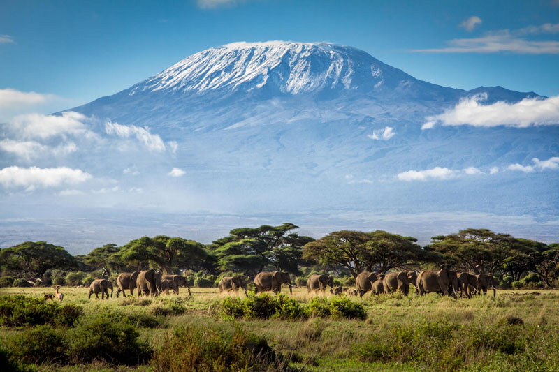 Kilimanjaro có sự đa dạng sinh học khổng lồ trong khi lại có ít loài đặc hữu.