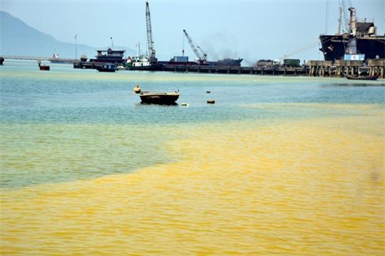 Nước màu vàng trong khu vực cảng Chân Mây là do loài tảo gây ra