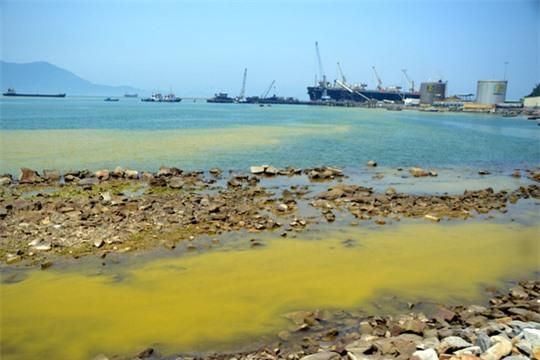 Loài tảo xuất hiện với mật độ lớn khiến nước chuyển màu vàng
